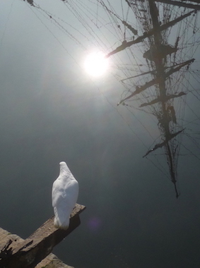 pigeon-ship-reflection